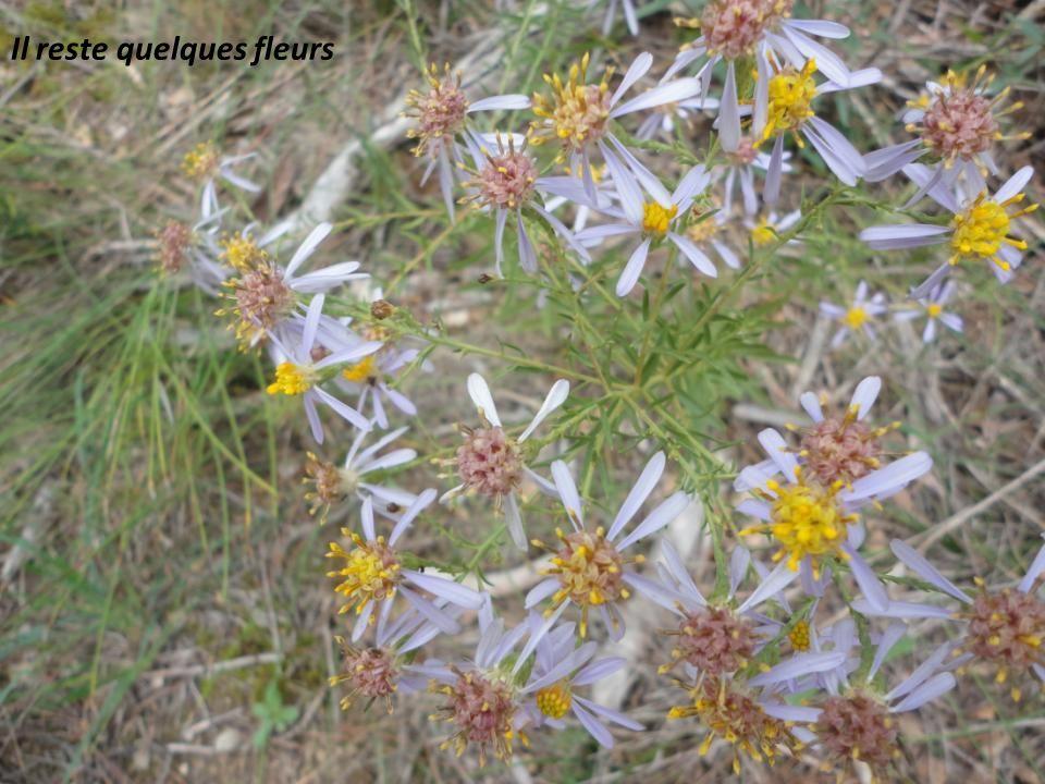 Il reste quelques fleurs