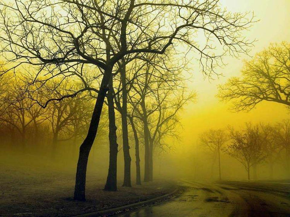Le bonheur que lon attend est plus beau que celui dont on jouit. André Maurois