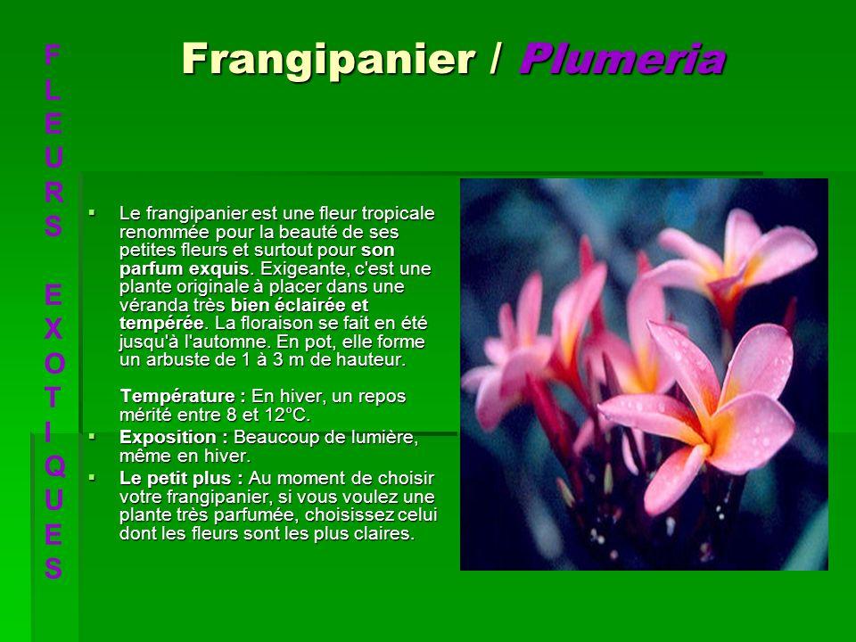 Frangipanier / Plumeria Le frangipanier est une fleur tropicale renommée pour la beauté de ses petites fleurs et surtout pour son parfum exquis. Exige