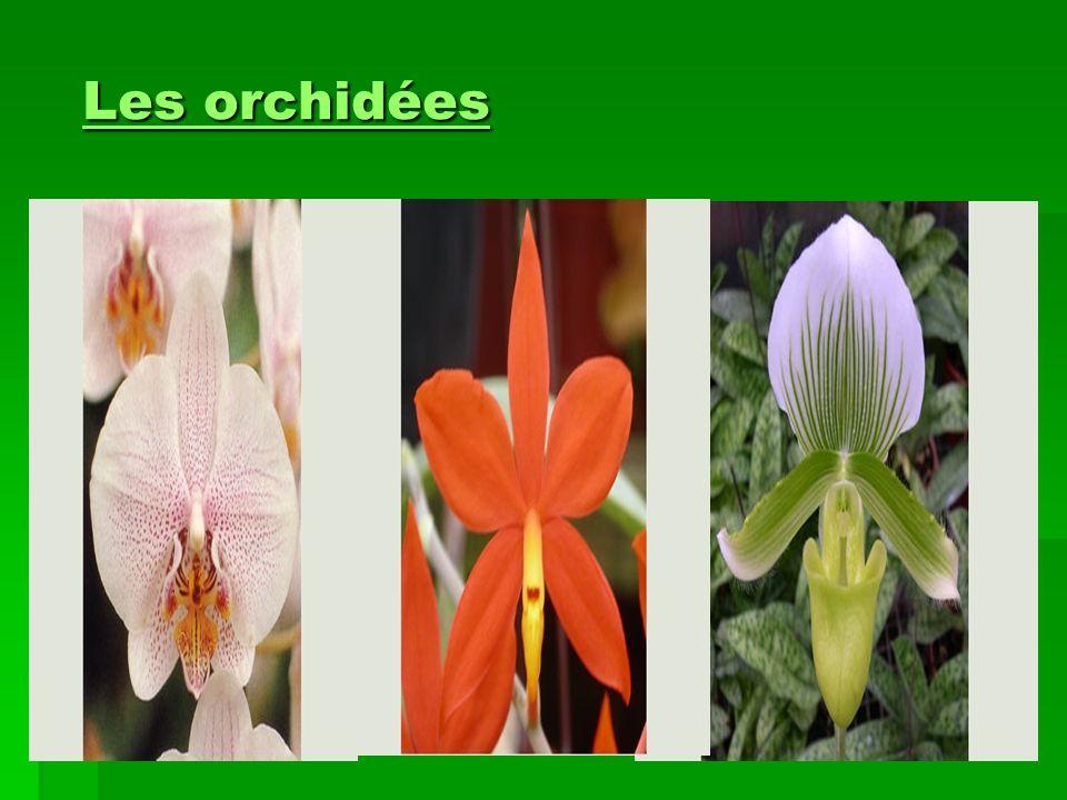 Les orchidéesLes orchidées Les orchidées Les orchidées