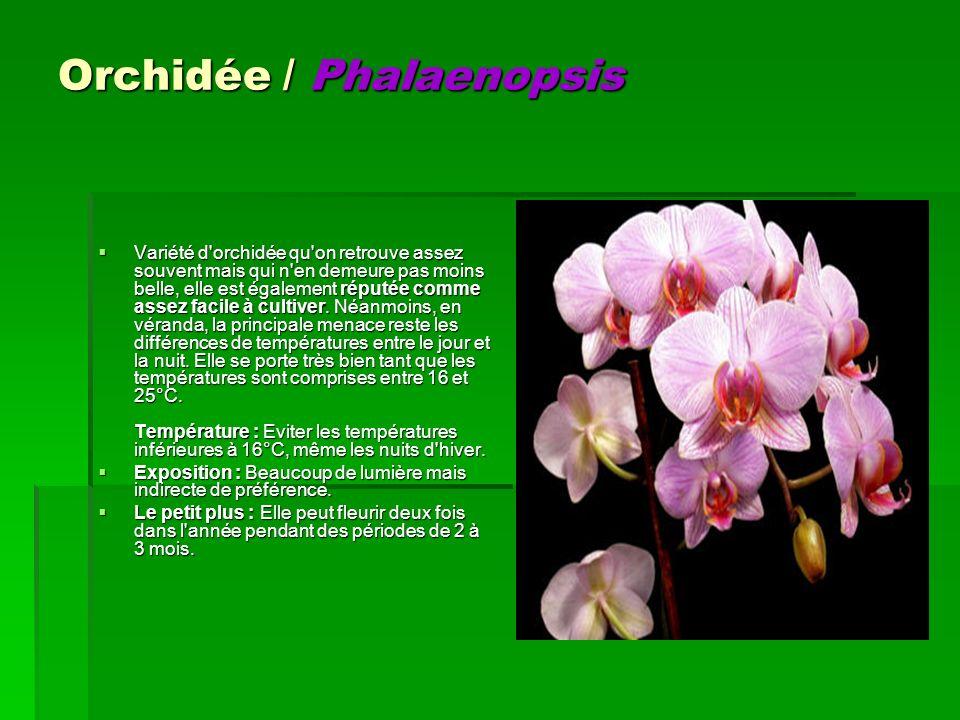 Orchidée / Phalaenopsis Variété d'orchidée qu'on retrouve assez souvent mais qui n'en demeure pas moins belle, elle est également réputée comme assez