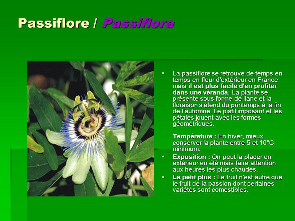 Passiflore / Passiflora La passiflore se retrouve de temps en temps en fleur d'extérieur en France mais il est plus facile d'en profiter dans une véra