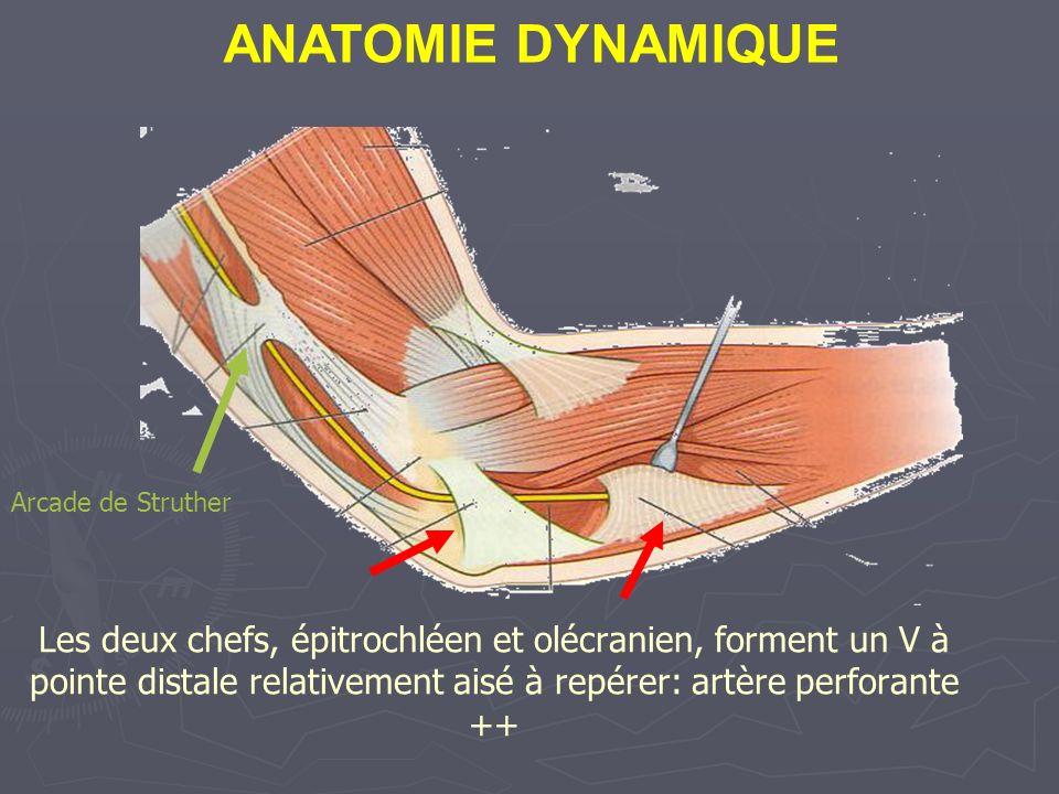 Les deux chefs, épitrochléen et olécranien, forment un V à pointe distale relativement aisé à repérer: artère perforante ++ Arcade de Struther ANATOMIE DYNAMIQUE