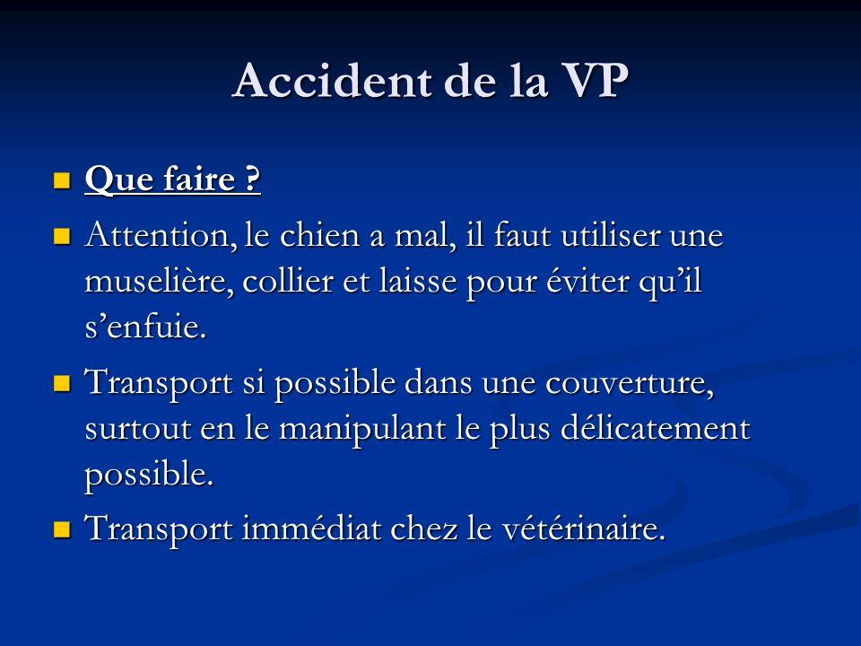 Accident de la VP Que faire ? Que faire ? Attention, le chien a mal, il faut utiliser une muselière, collier et laisse pour éviter quil senfuie. Atten