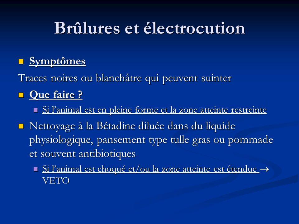 Brûlures et électrocution Symptômes Symptômes Traces noires ou blanchâtre qui peuvent suinter Que faire ? Que faire ? Si lanimal est en pleine forme e