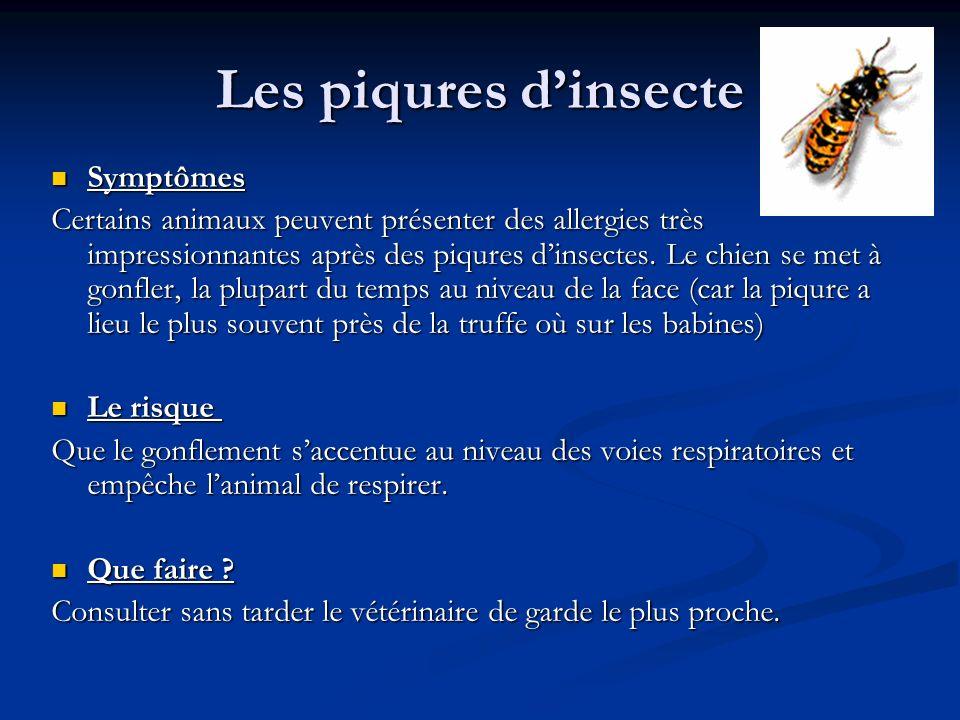 Les piqures dinsecte Symptômes Symptômes Certains animaux peuvent présenter des allergies très impressionnantes après des piqures dinsectes. Le chien