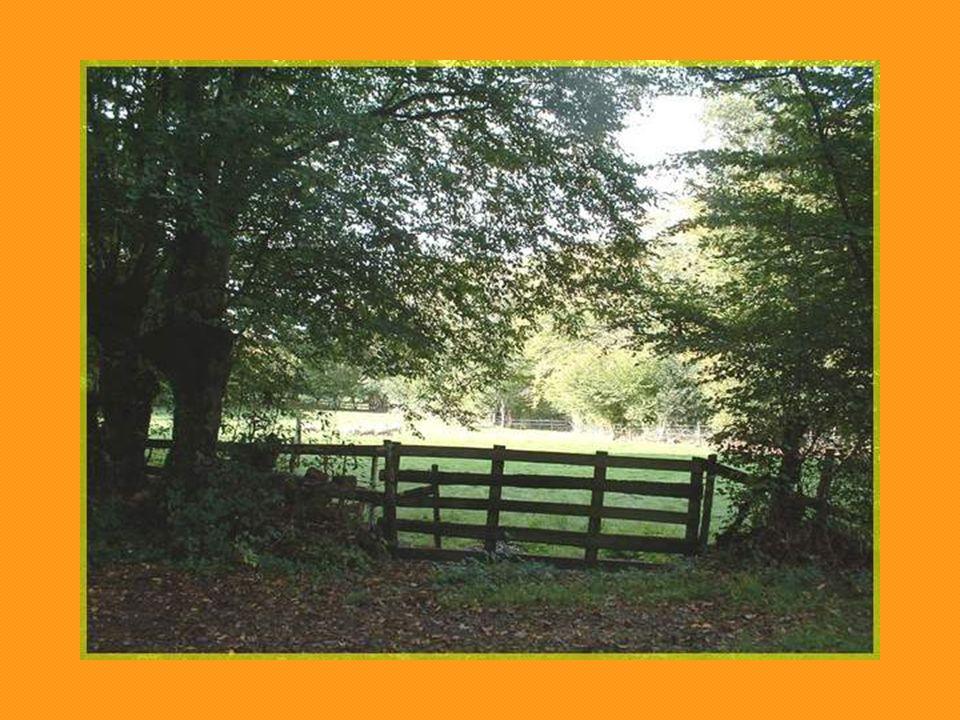 Située à lorée des bois, à proximité des sentiers de randonnées, elle demeure ouverte aux passants…