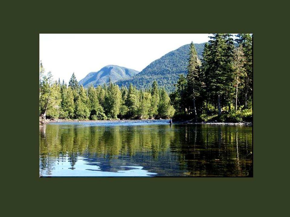 Mes souvenirs denfance sont encore baignés de ces longues randonnées à lintérieur des terres, avec mon père, à la découverte des rivières poissonneuses et des torrents déchaînés.