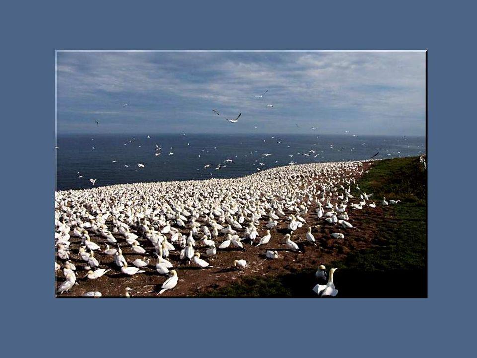Il est un pays à lextrémité maritime du Québec que je chéris particulièrement parce que mon cœur denfant y est resté accroché quelque part, entre falaise et mer, pris dans les mailles dun filet de pêche au hareng ou emporté sur les ailes immenses dun fou de bassan.