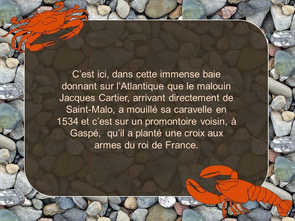 Cest ici, dans cette immense baie donnant sur lAtlantique que le malouin Jacques Cartier, arrivant directement de Saint-Malo, a mouillé sa caravelle en 1534 et cest sur un promontoire voisin, à Gaspé, quil a planté une croix aux armes du roi de France.