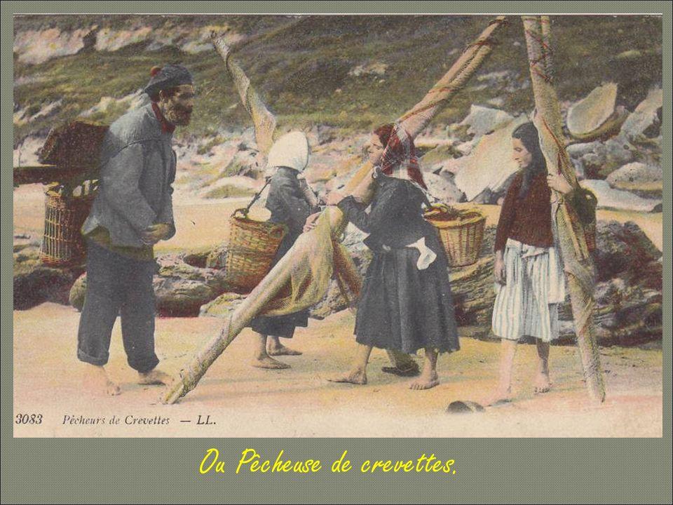 La sarcleuse et ramasseuse de betteraves et de pommes de terre retourne sur la plage et redevient « Vérotière »,