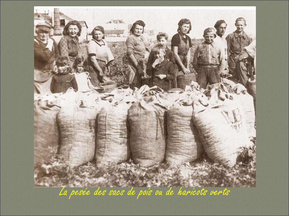 La pesée des sacs de pois ou de haricots verts