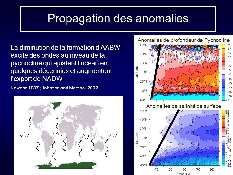 Propagation des anomalies Anomalies de profondeur de Pycnocline Anomalies de salinité de surface La diminution de la formation dAABW excite des ondes au niveau de la pycnocline qui ajustent locéan en quelques décennies et augmentent lexport de NADW Kawase 1987 ; Johnson and Marshall 2002