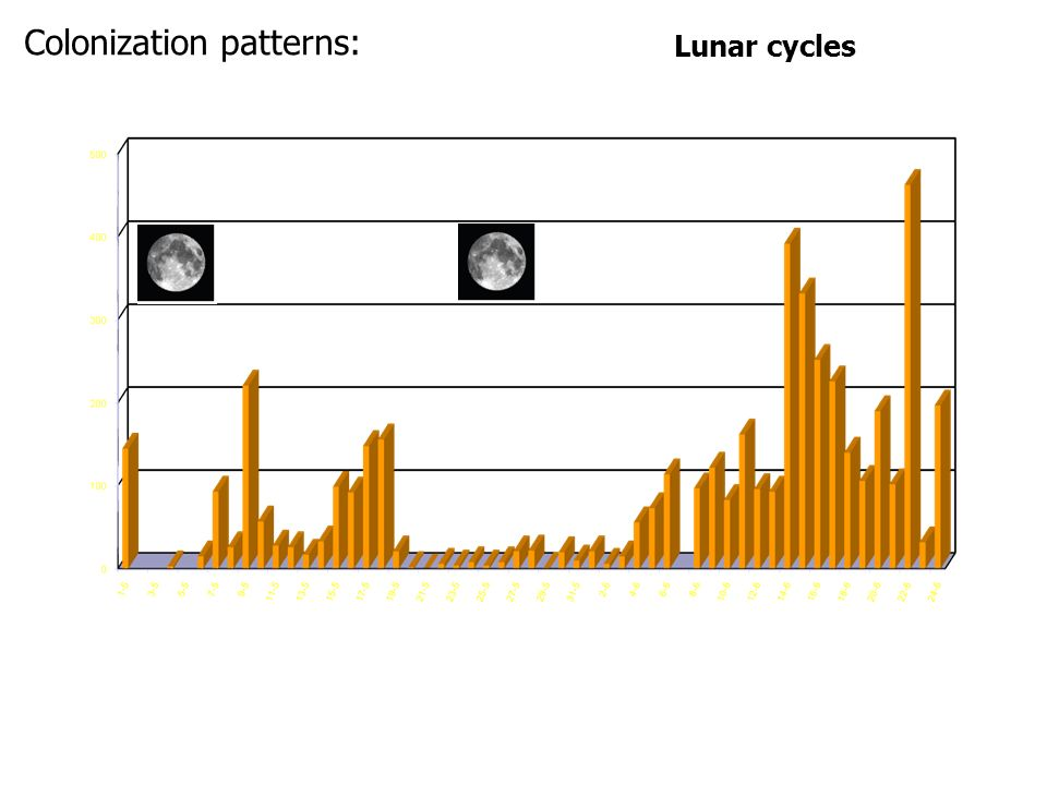 Lunar cycles Colonization patterns: