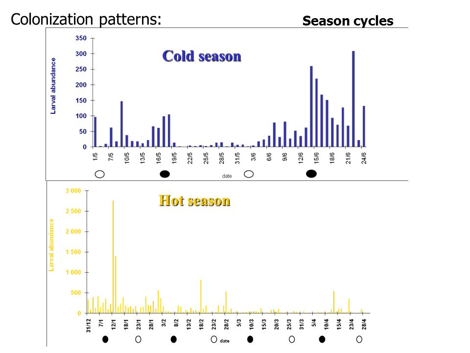 Season cycles Cold season Hot season Colonization patterns: