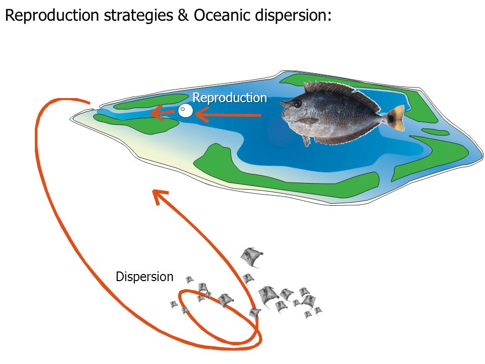 Reproduction Dispersion Reproduction strategies & Oceanic dispersion: