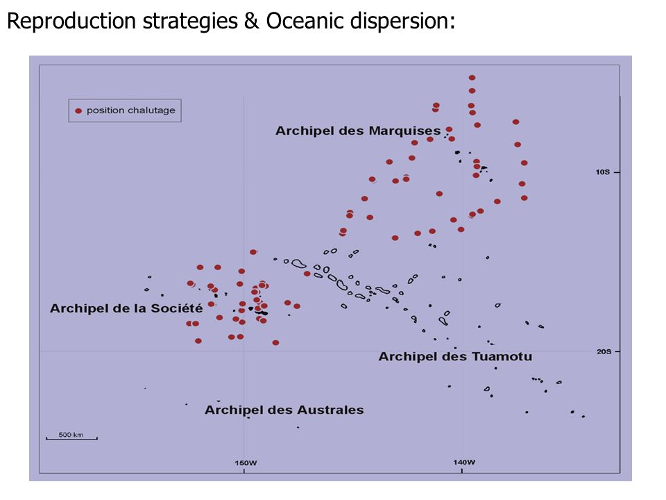 . 1995-1997. 19 campagnes ALIS. 134 chalutages dont 93 examinés Reproduction strategies & Oceanic dispersion: