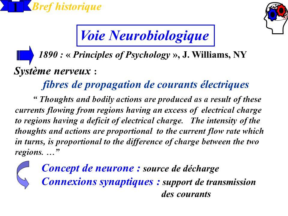 1 Bref historique 1890 : « Principles of Psychology », J. Williams, NY Voie Neurobiologique Système nerveux : fibres de propagation de courants électr