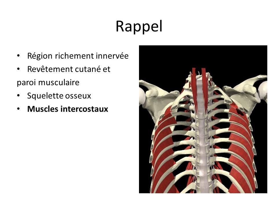 Rappel Région richement innervée Revêtement cutané et paroi musculaire Squelette osseux Muscles intercostaux Artères et veines Cœur Péricarde
