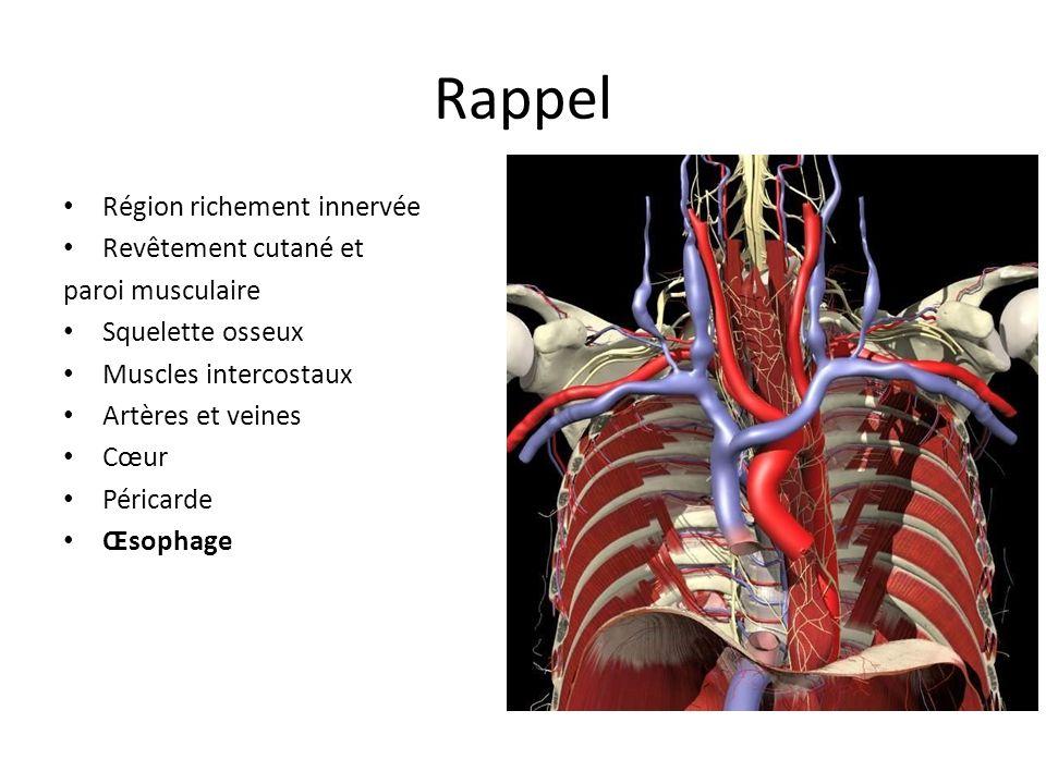 Rappel Région richement innervée Revêtement cutané et paroi musculaire Squelette osseux Muscles intercostaux Artères et veines Cœur Péricarde Œsophage Poumons