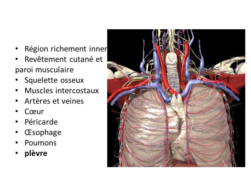 Région richement innervée Revêtement cutané et paroi musculaire Squelette osseux Muscles intercostaux Artères et veines Cœur Péricarde Œsophage Poumon