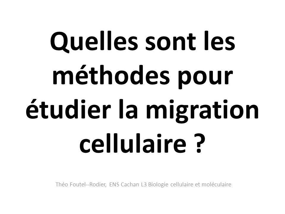 Quelles sont les méthodes pour étudier la migration cellulaire ? Théo Foutel--Rodier, ENS Cachan L3 Biologie cellulaire et moléculaire