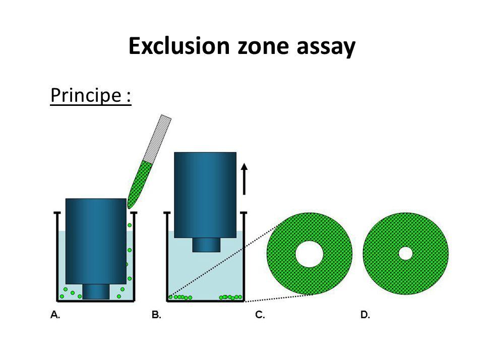 Exclusion zone assay Principe :