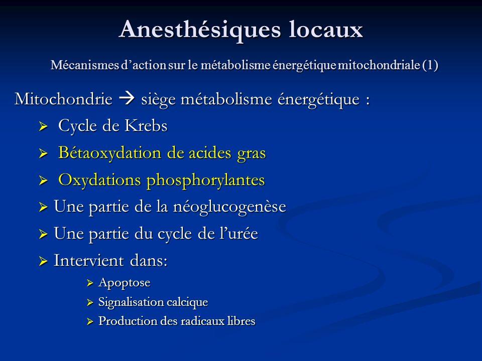 Anesthésiques locaux Mécanismes daction sur le métabolisme énergétique mitochondriale (1) Mitochondrie siège métabolisme énergétique : Cycle de Krebs