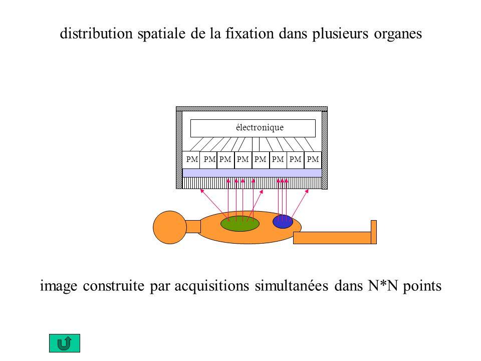 électronique PM PM PM PM distribution spatiale de la fixation dans plusieurs organes image construite par acquisitions simultanées dans N*N points
