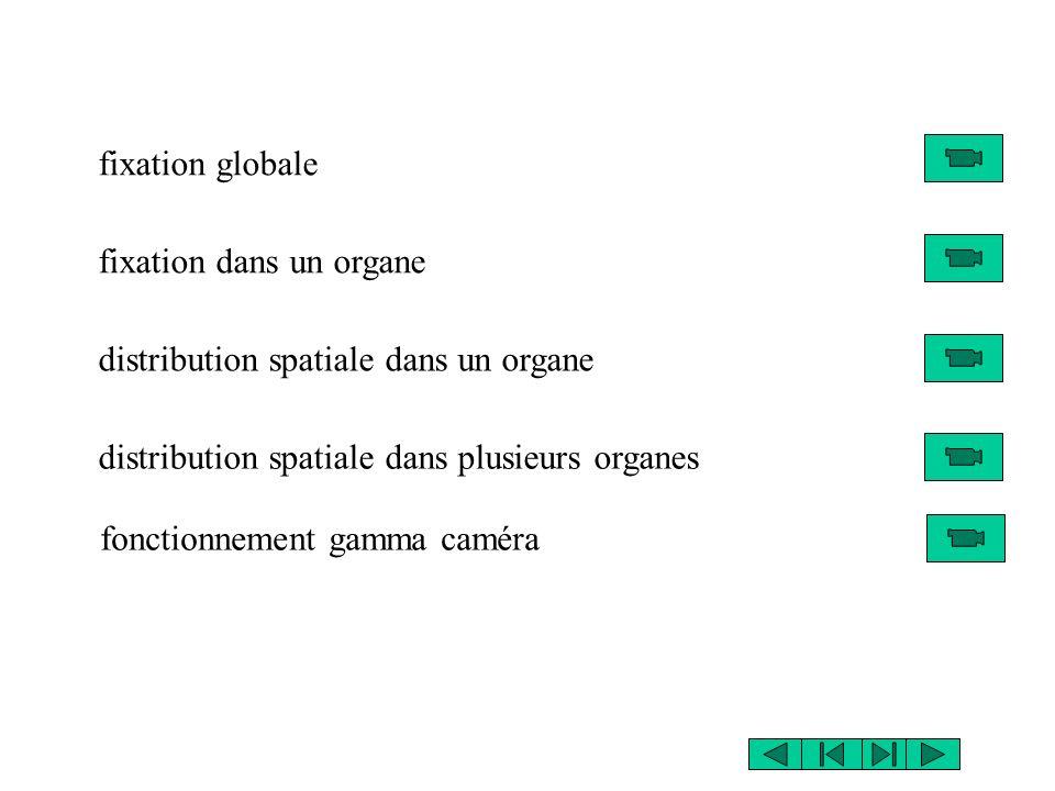 fixation globale fixation dans un organe distribution spatiale dans un organe distribution spatiale dans plusieurs organes fonctionnement gamma caméra