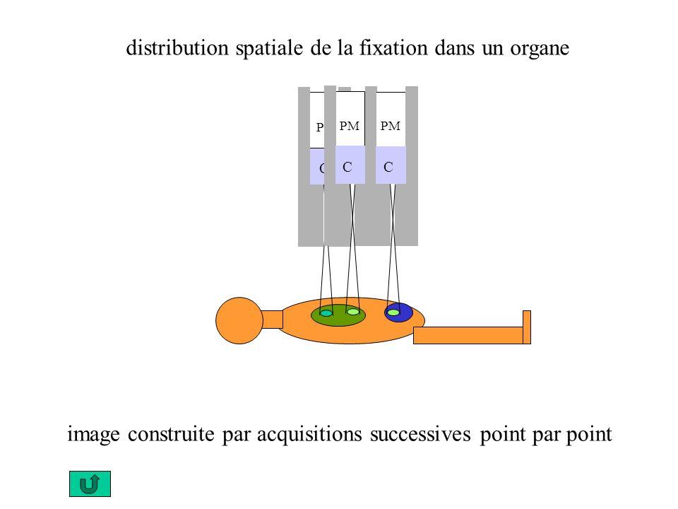 PM C C distribution spatiale de la fixation dans un organe image construite par acquisitions successives point par point PM C