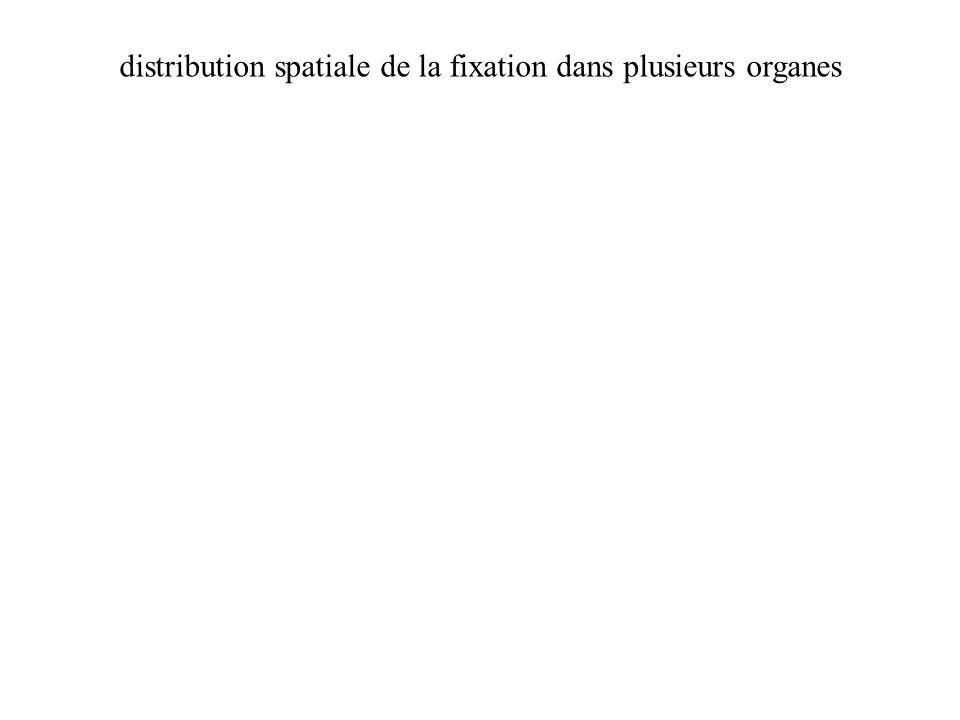 distribution spatiale de la fixation dans plusieurs organes