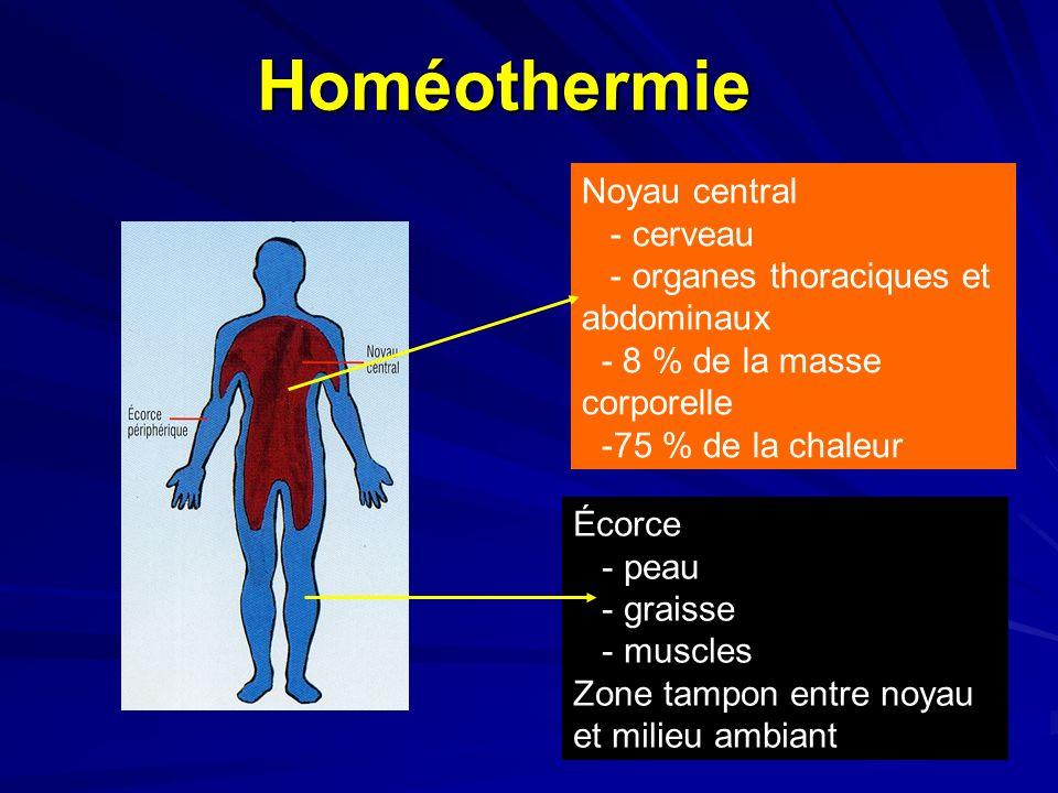 Homéothermie Noyau central - cerveau - organes thoraciques et abdominaux - 8 % de la masse corporelle -75 % de la chaleur Écorce - peau - graisse - muscles Zone tampon entre noyau et milieu ambiant