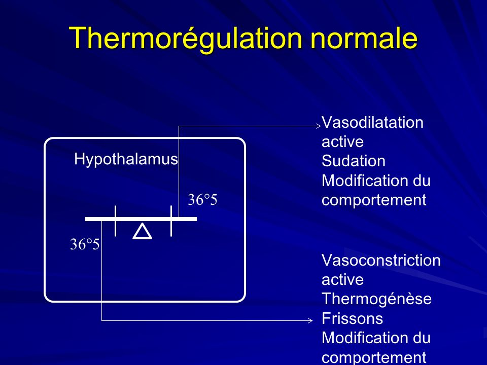 Volume corporel à la température du noyau Ambiance froideAmbiance chaude