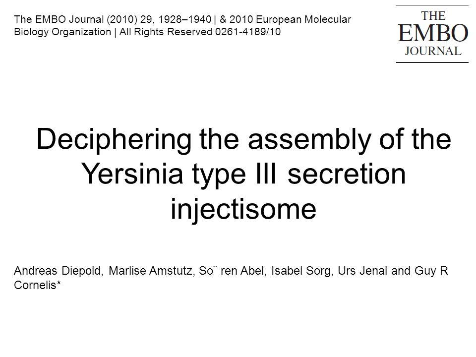 Conclusions et Discussion L assemblage de linjectisome (T3SS) est un processus complexe qui engage plus de 25 protéines différentes Formation d une nano-machine traversant les deux membranes bactériennes et se prolongeant hors de la bactérie Modèle proposé pour le flagelle (Kubori et al, 1997; Macnab, 2003) Processus dassemblage mal connu Même schéma général d assemblage chez Salmonella enterica Lanneau de lMI sassemble d abord, puis fusionne avec l anneau de sécrétine dans l ME (Kimbrough et Miller, 2002) N explique pas comment les deux anneaux membranaires se rejoignent Les étapes ultérieures d assemblage ??