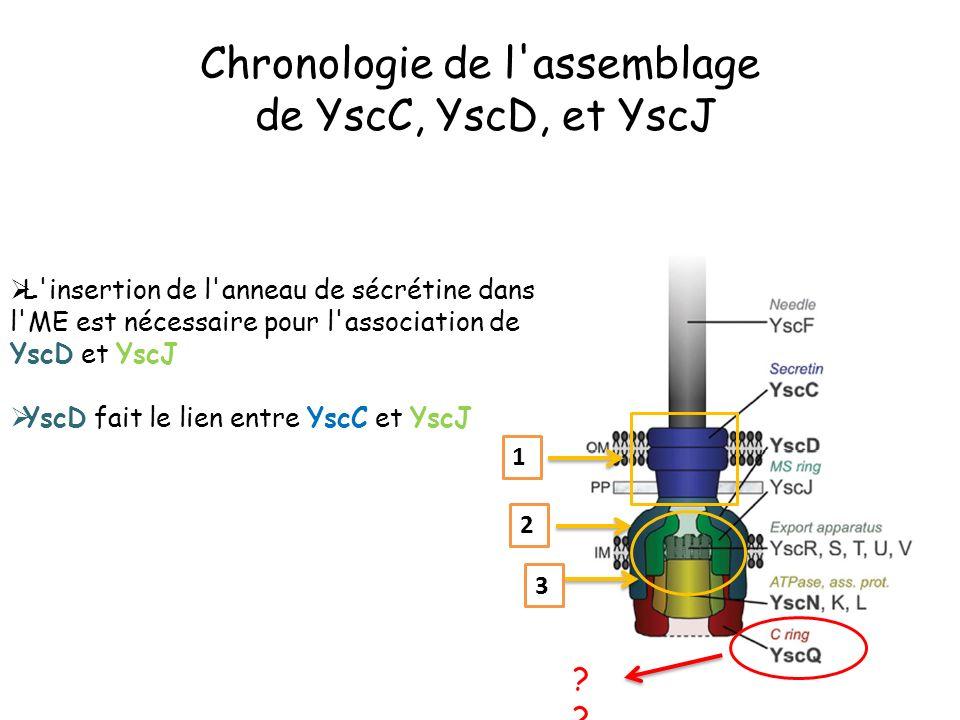 L insertion de l anneau de sécrétine dans l ME est nécessaire pour l association de YscD et YscJ YscD fait le lien entre YscC et YscJ 1 2 3 Chronologie de l assemblage de YscC, YscD, et YscJ ?