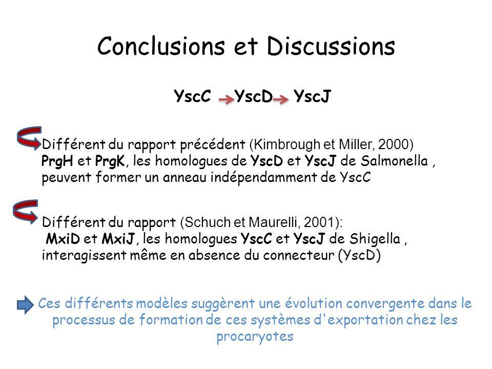 Différent du rapport précédent (Kimbrough et Miller, 2000) PrgH et PrgK, les homologues de YscD et YscJ de Salmonella, peuvent former un anneau indépendamment de YscC Différent du rapport (Schuch et Maurelli, 2001): MxiD et MxiJ, les homologues YscC et YscJ de Shigella, interagissent même en absence du connecteur (YscD) Ces différents modèles suggèrent une évolution convergente dans le processus de formation de ces systèmes d exportation chez les procaryotes Conclusions et Discussions YscC YscD YscJ