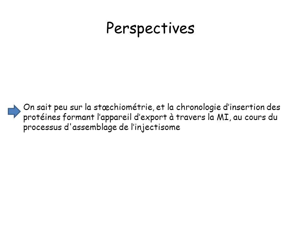 On sait peu sur la stœchiométrie, et la chronologie dinsertion des protéines formant lappareil dexport à travers la MI, au cours du processus d assemblage de linjectisome Perspectives
