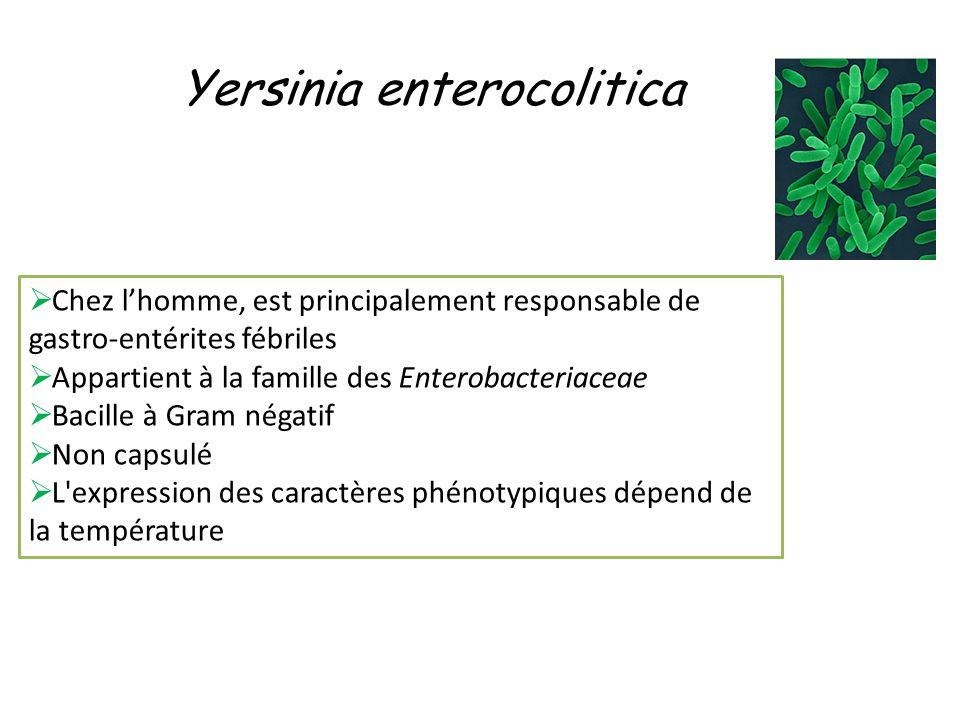 Yersinia enterocolitica Chez lhomme, est principalement responsable de gastro-entérites fébriles Appartient à la famille des Enterobacteriaceae Bacille à Gram négatif Non capsulé L expression des caractères phénotypiques dépend de la température