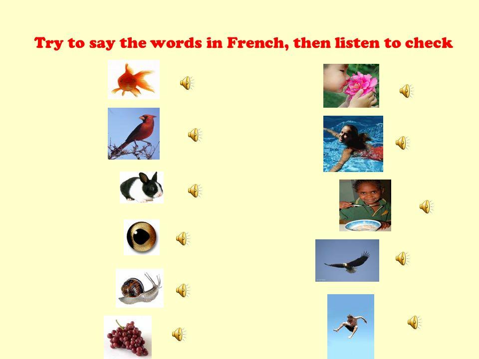 le poisson loiseau le lapin sentir nager manger voler sauter les yeux l escargot les raisins Listen and Repeat Click to hear