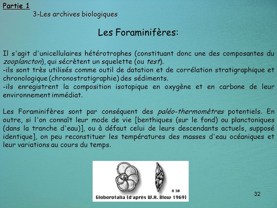 32 Les Foraminifères: Il s'agit d'unicellulaires hétérotrophes (constituant donc une des composantes du zooplancton), qui sécrètent un squelette (ou t