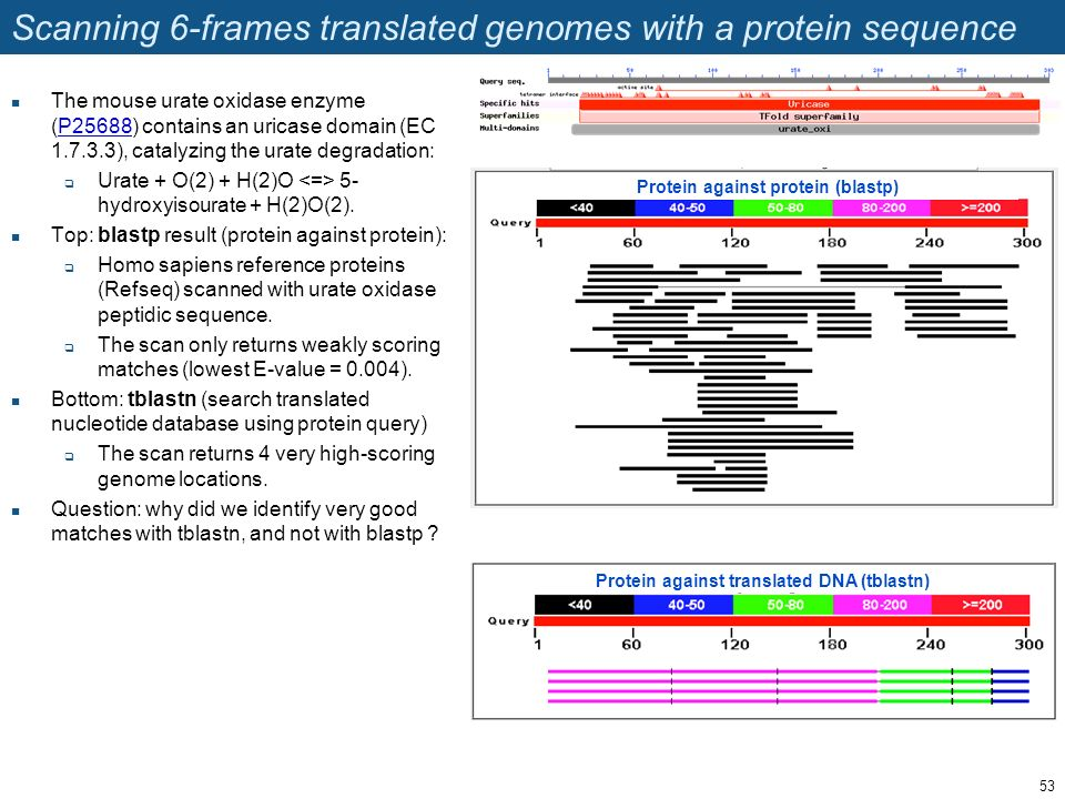 Scanning 6-frames translated genomes with a protein sequence The mouse urate oxidase enzyme (P25688) contains an uricase domain (EC 1.7.3.3), catalyzi