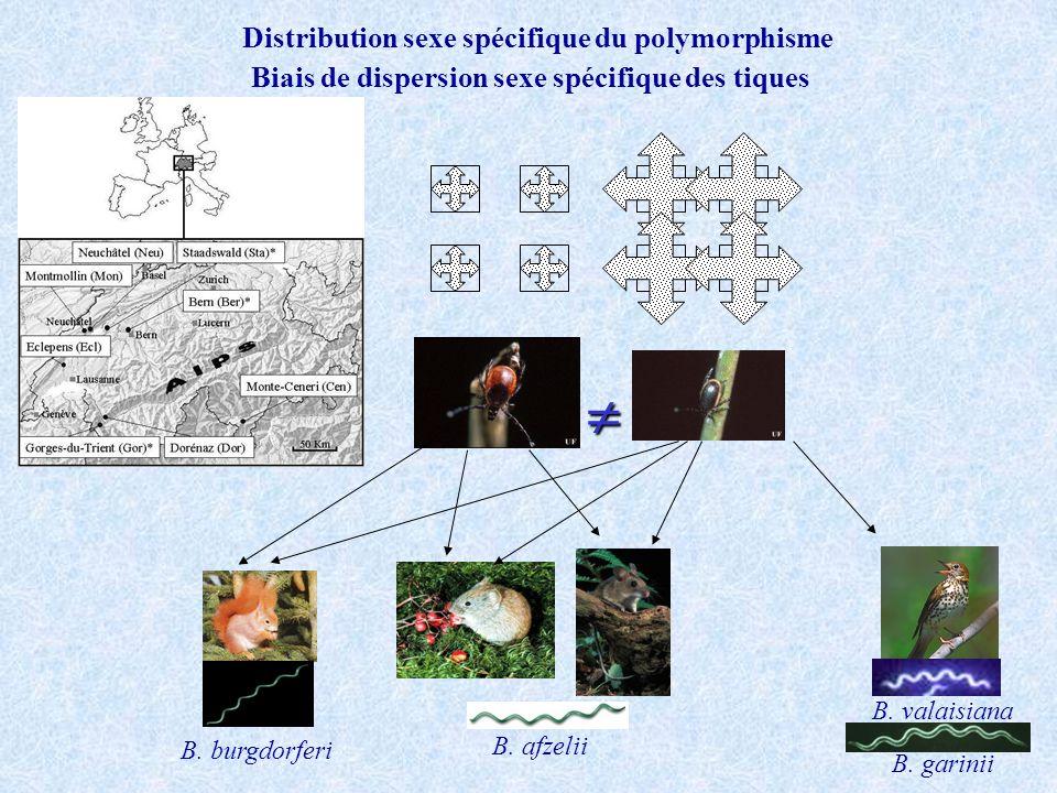 Distribution sexe spécifique du polymorphisme B. burgdorferi B. valaisiana B. garinii B. afzelii Biais de dispersion sexe spécifique des tiques