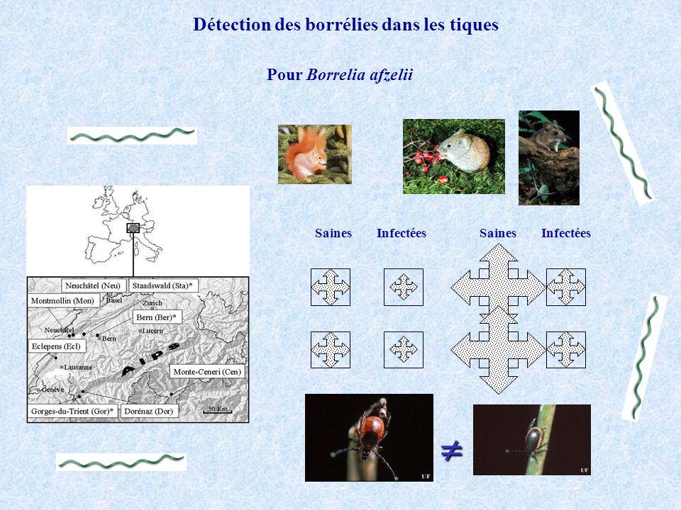 Pour Borrelia afzelii SainesInfectées Détection des borrélies dans les tiques SainesInfectées