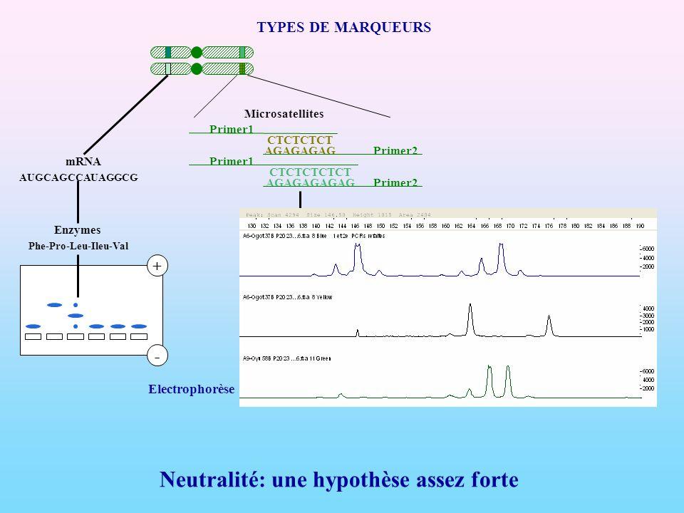Neutralité: une hypothèse assez forte TYPES DE MARQUEURS Enzymes mRNA +- CTCTCTCT AGAGAGAG Primer1 Primer2 PCR CTCTCTCTCT AGAGAGAGAG Primer1 Primer2 +