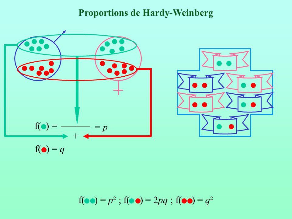 Altérations des proportions de Hardy Weinberg Déficits en hétérozygotes Effet Wahlund Taenia solium Nasonia vitripenis Endogamies Rh - Rh - Rh + Rh - Sous dominance Causes techniques Allèles nuls Dominance des allèles courts Homogamie