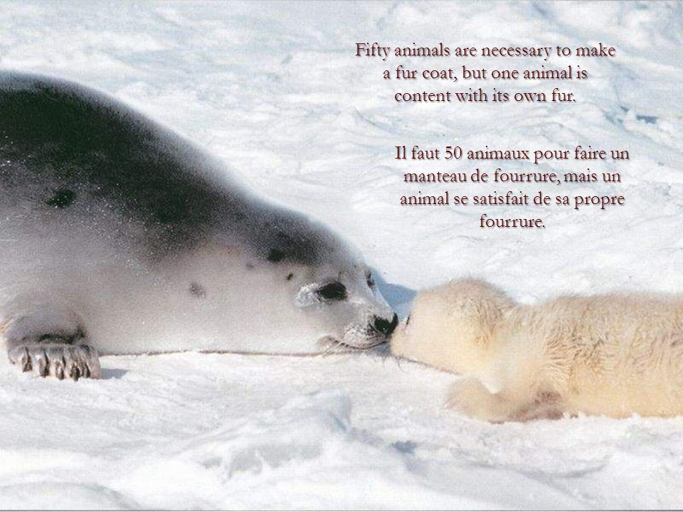 Fifty animals are necessary to make a fur coat, but one animal is content with its own fur.