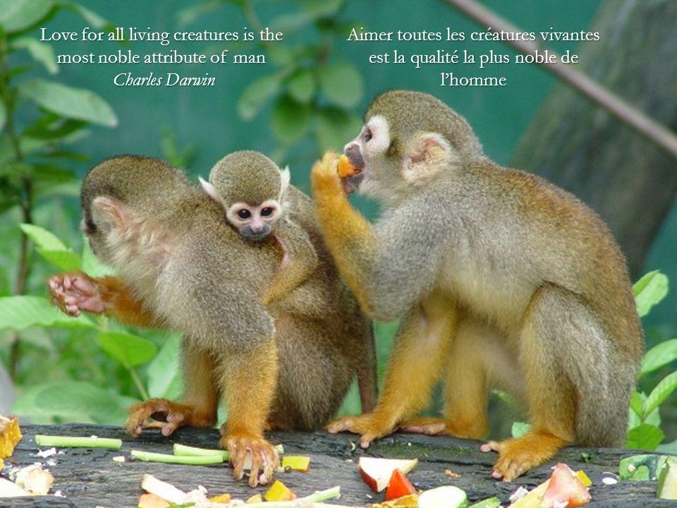 Love for all living creatures is the most noble attribute of man Charles Darwin Charles Darwin Aimer toutes les créatures vivantes est la qualité la plus noble de lhomme