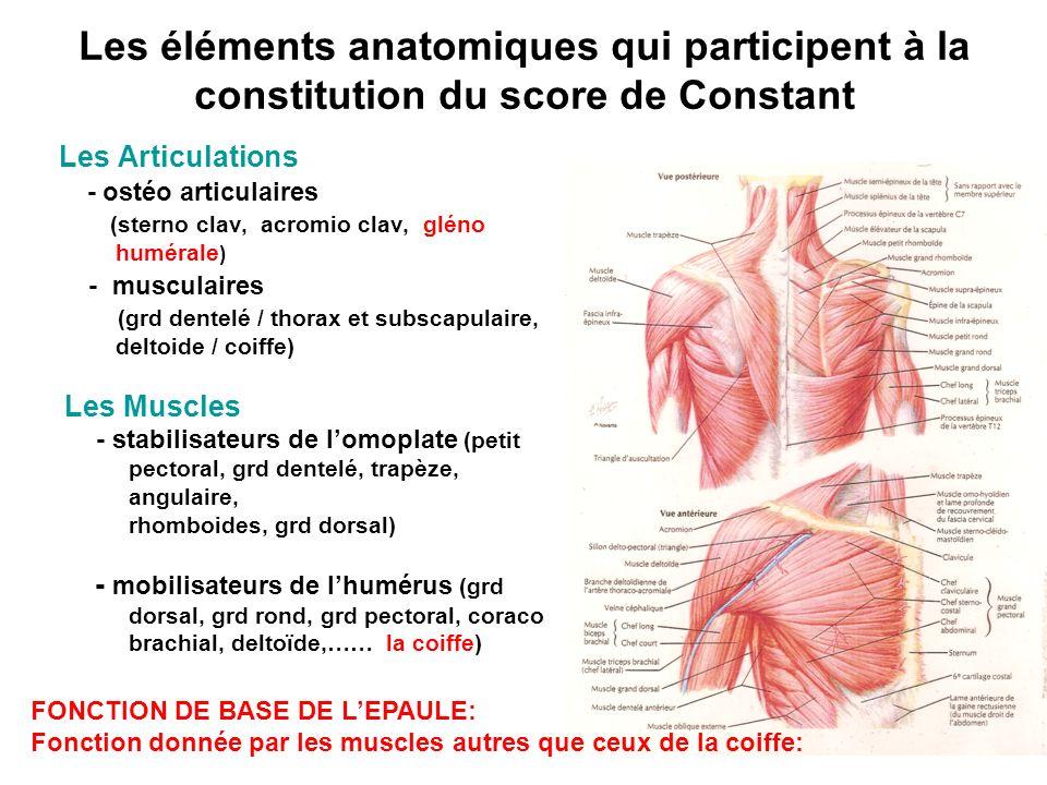 Les éléments anatomiques qui participent à la constitution du score de Constant Les Articulations - ostéo articulaires (sterno clav, acromio clav, gléno humérale ) - musculaires (grd dentelé / thorax et subscapulaire, deltoide / coiffe) Les Muscles - stabilisateurs de lomoplate (petit pectoral, grd dentelé, trapèze, angulaire, rhomboides, grd dorsal) - mobilisateurs de lhumérus (grd dorsal, grd rond, grd pectoral, coraco brachial, deltoïde,…… la coiffe) FONCTION DE BASE DE LEPAULE: Fonction donnée par les muscles autres que ceux de la coiffe: