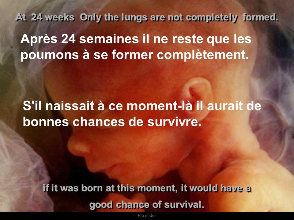 Ria slides L'écographie permet de voir les caractéristiques du bébé, et même l'expression de son visage.